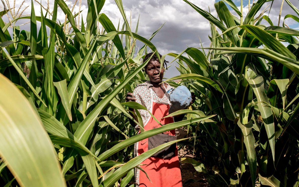 La Namibie veut mettre fin au «statu quo» des fermes aux mains des Blancs