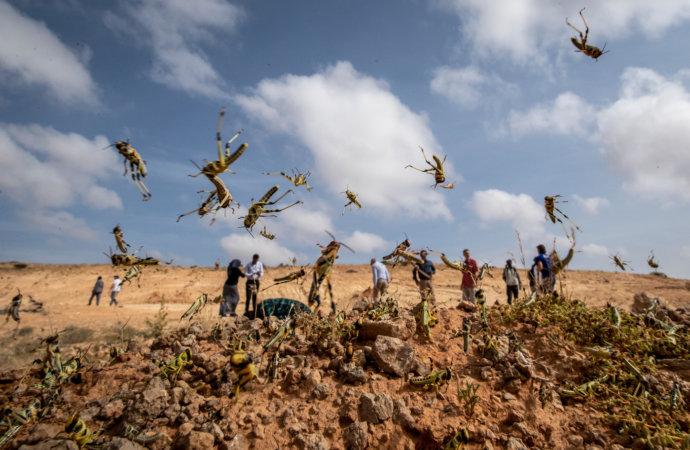Afrique: Le fléau biblique qui frappe l'Afrique de l'est va s'aggraver
