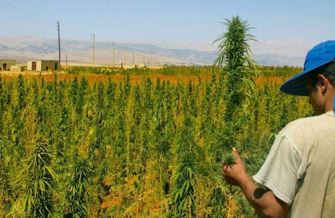 Gros producteur de haschich, le Maroc veut passer au cannabis «thérapeutique»