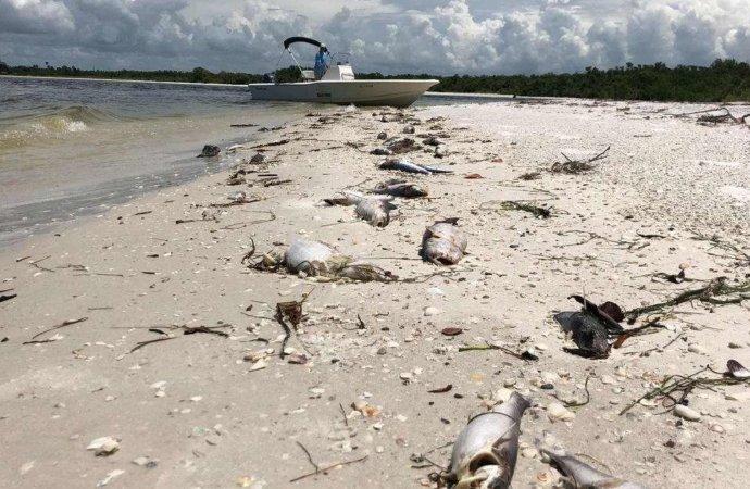 Ghana: quelque 60 dauphins et des poissons d'autres espèces échoués sur des plages