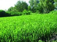 Campagne agricole 2021 Prometteuse - Campagne agricole 2021: Prometteuse