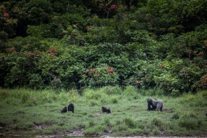 « Superpuissance verte africaine, le Gabon veut faire contribuer les marchés financiers à la lutte contre le changement climatique » (Financial Times)