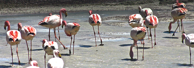 lagunabrava_flamants1