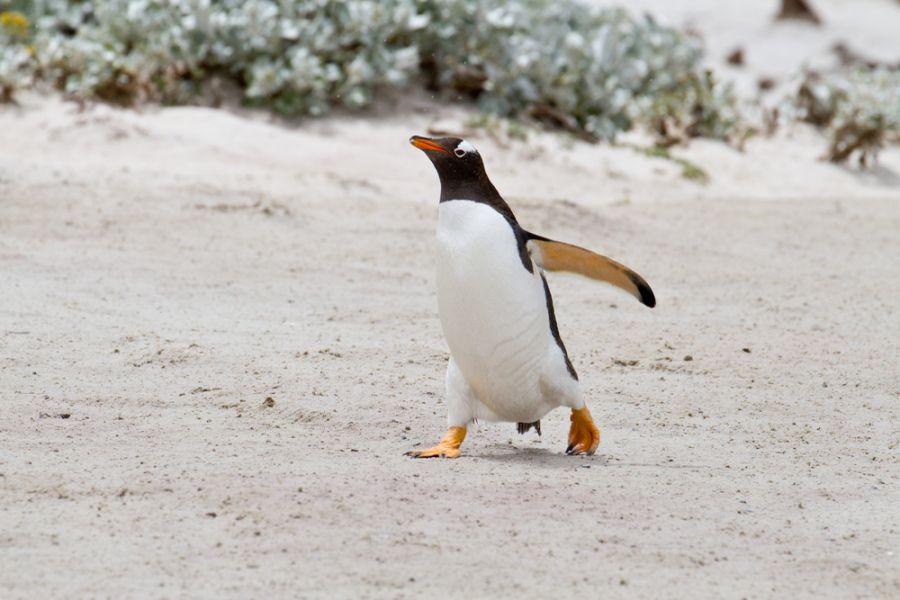 Falkland Islands VP8IDX VP8IDX/MM DX News