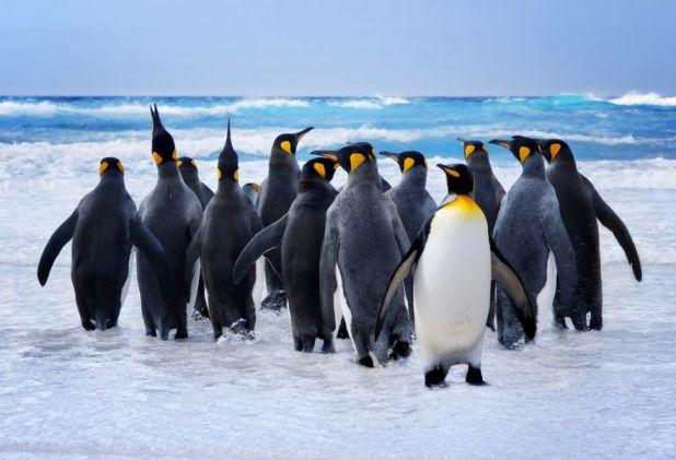 Falkland Islands VP8IDX VP8IDX/MM