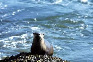 Galliano seal