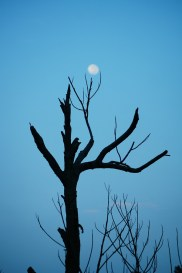 moon and the dead branch 1