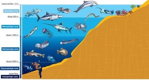 Ocean Zones  Lesson  HelpTeaching