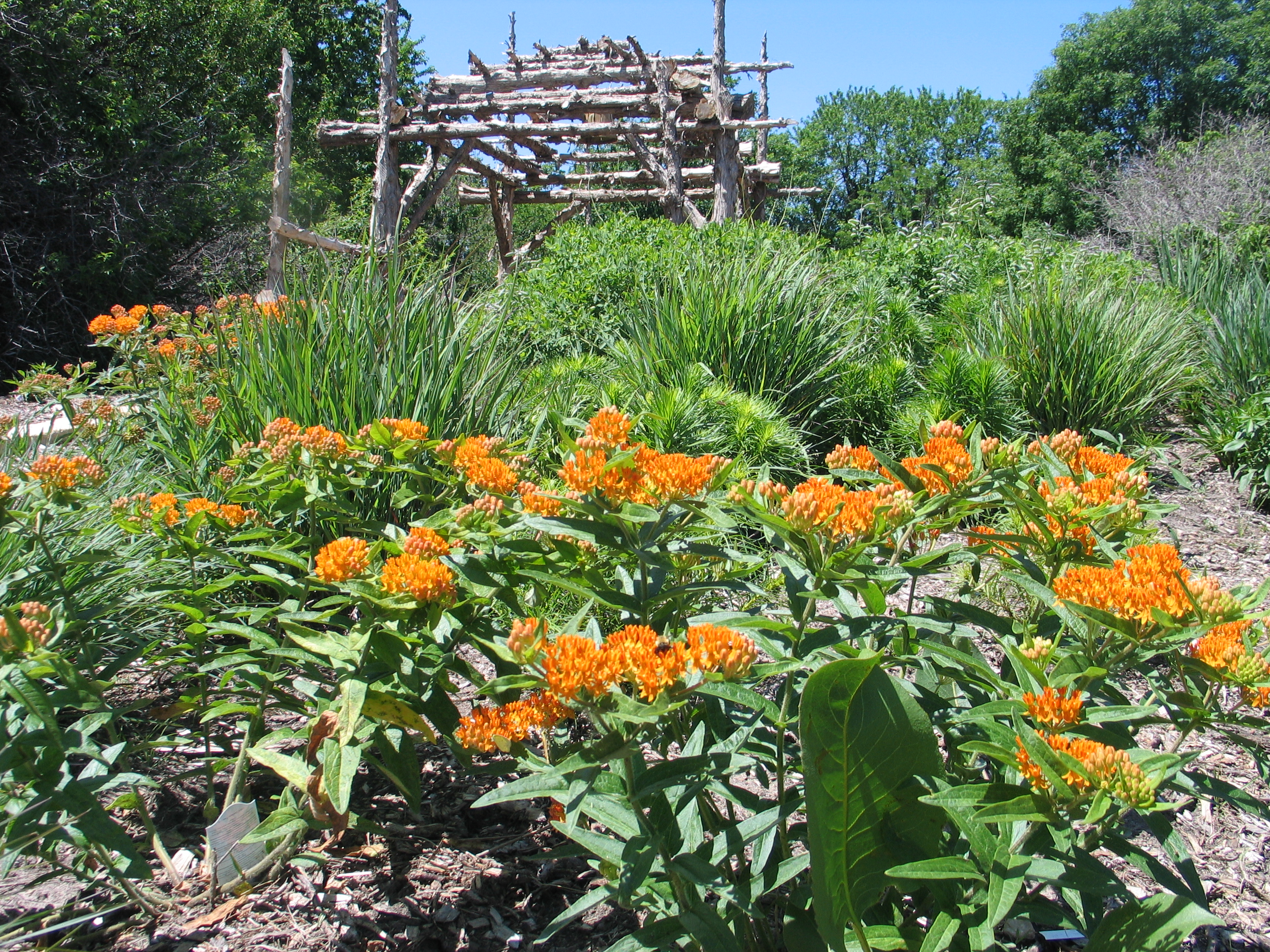 How To Design A Native Plant Garden