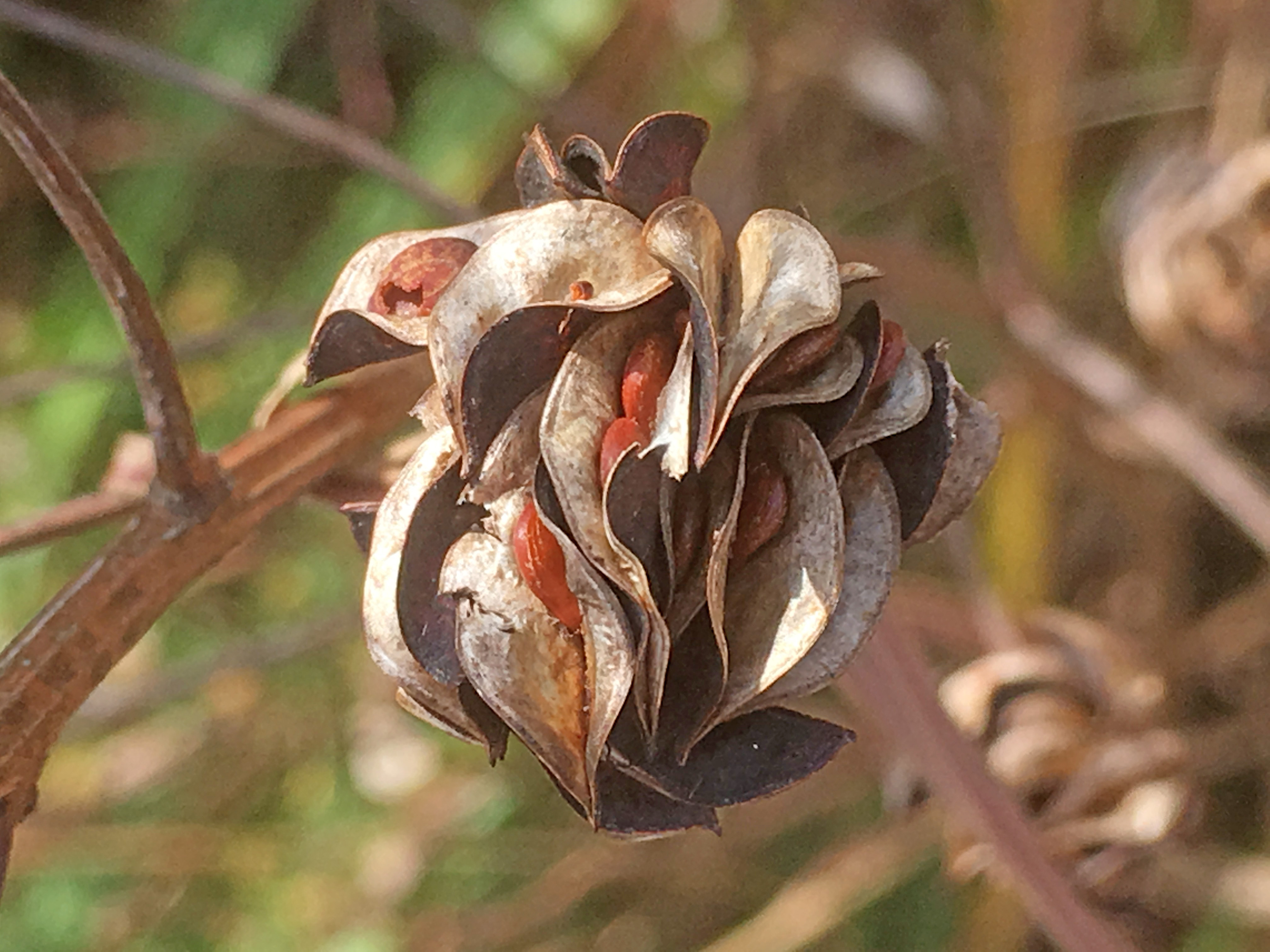 Seed Dispersal Archives