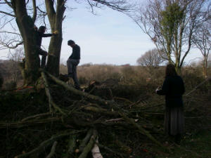 Hedgerow restoration on a Volunteer Workday