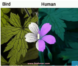 birds-vision-vs-humans-vision-by-biohover