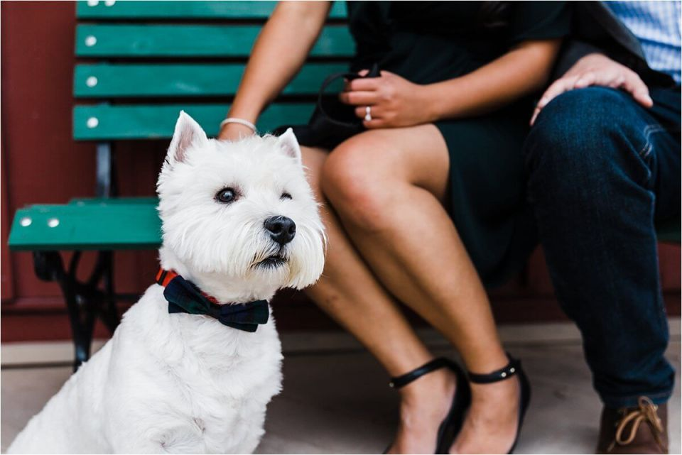 cute white bestie dog with bowtie at engagement sitting in front of bench - London Cambridge Stratford Woodstock Grand Bend Strathroy Ontario Wedding Engagement Photographer by Dylan Martin Photography with Dylan and Sandra