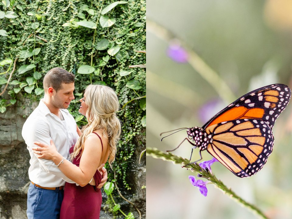 Engaged couple hugging at the butterfly conservatory