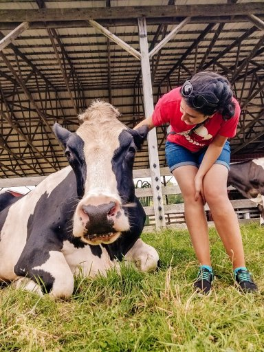 Young woman petting a cow at the Watkins Glen Farm Sanctuary