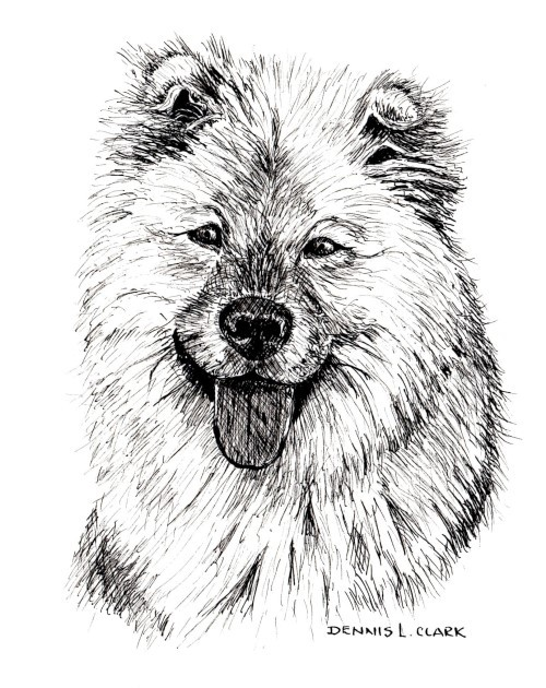 How To Draw A Long Haired Dog In Pen And Ink Online Art Lessons