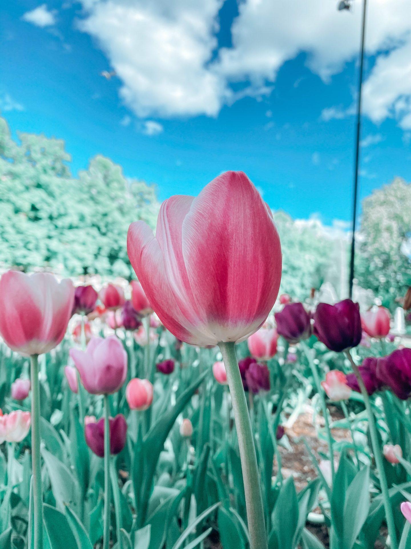 Flowers at Frogner Park