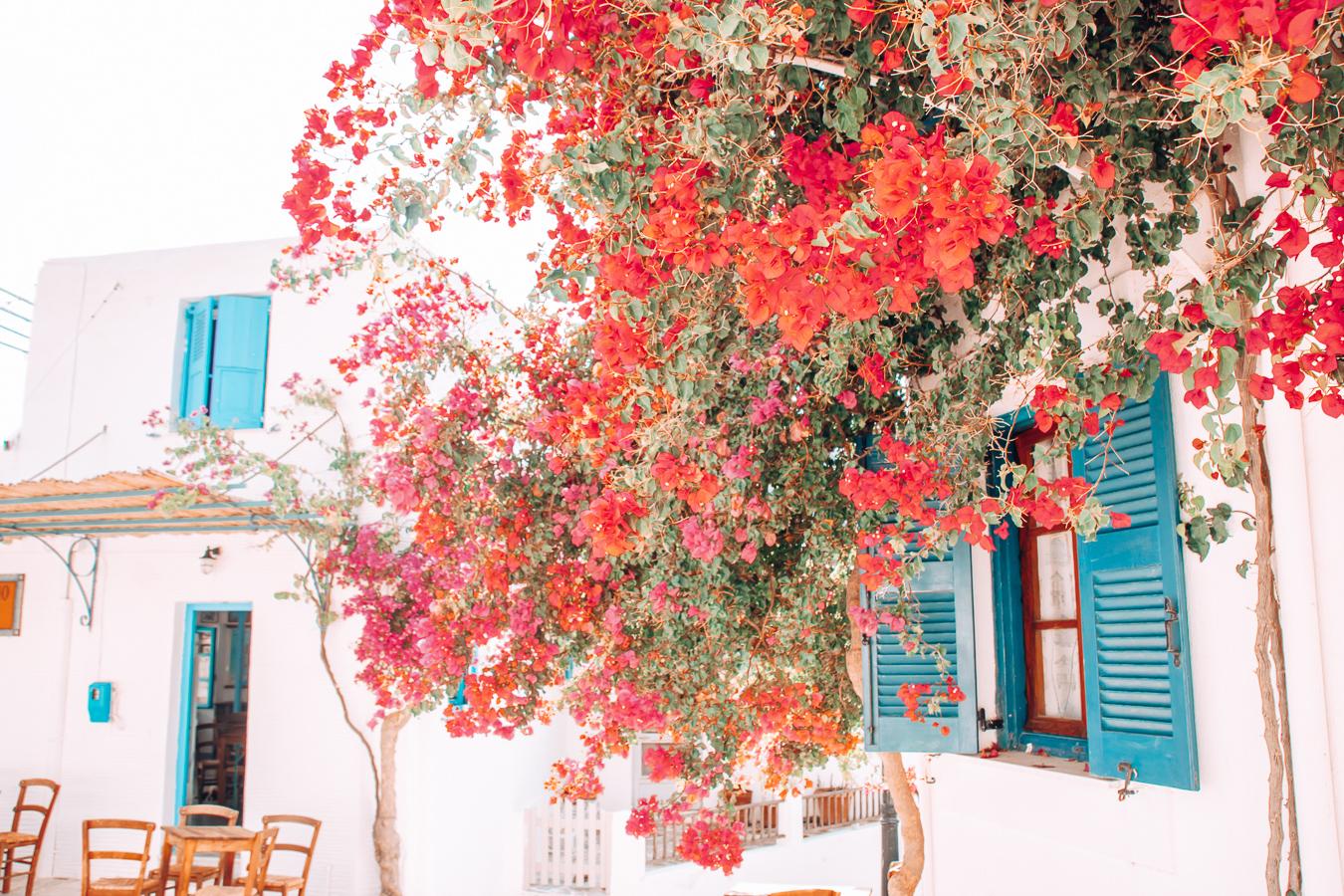 Flowers in Paros