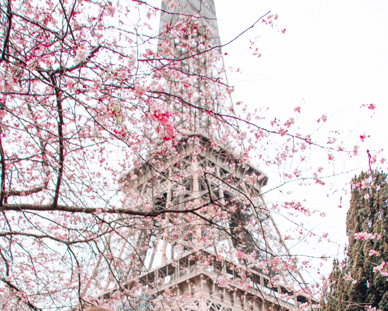 Blossoms and the Eiffel Tower