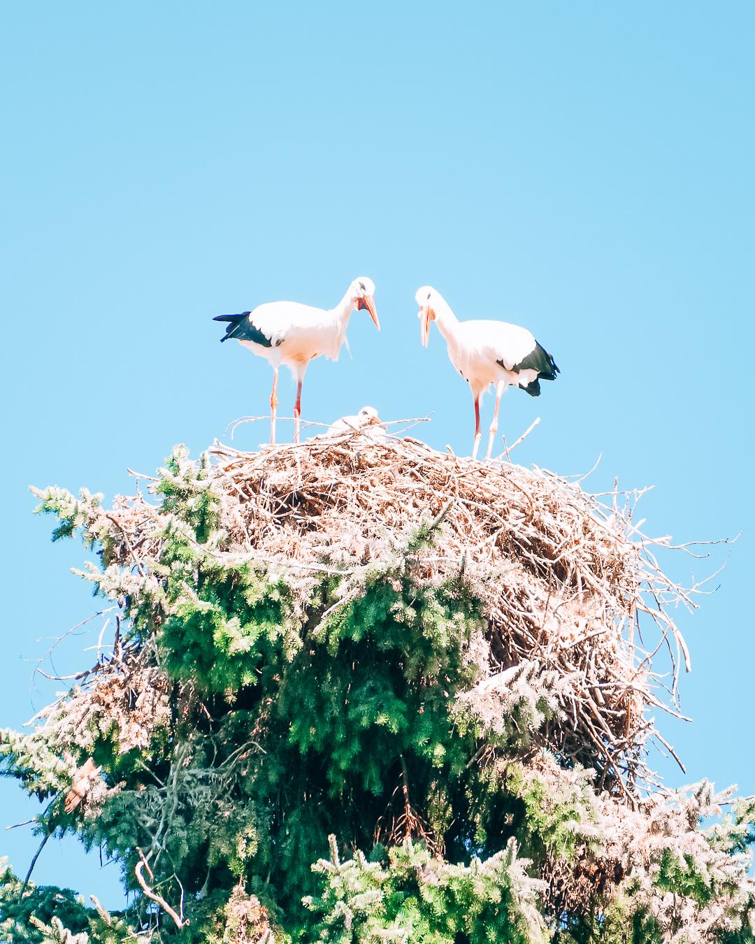 Birds in Weltvogelpark Walsrode