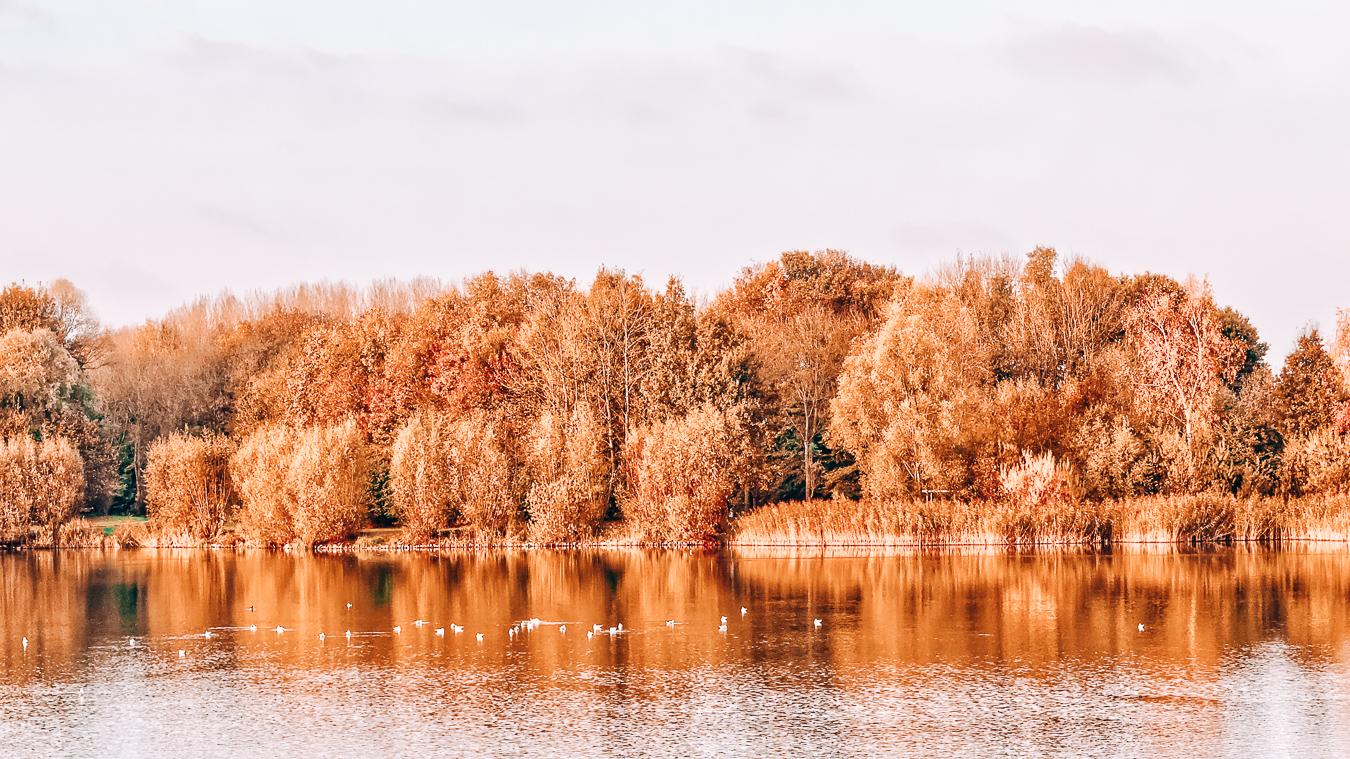 Trees during autumn in Belgium