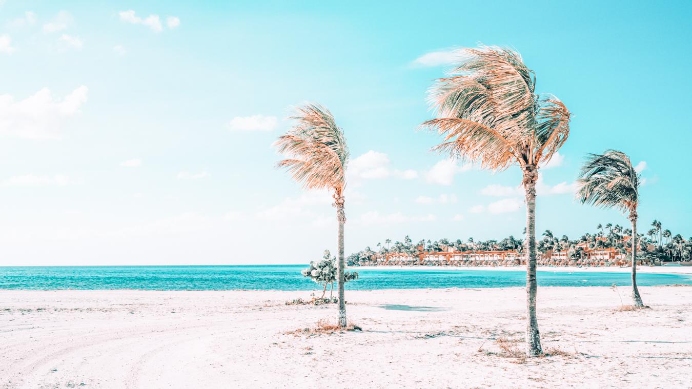 Palm trees in Aruba