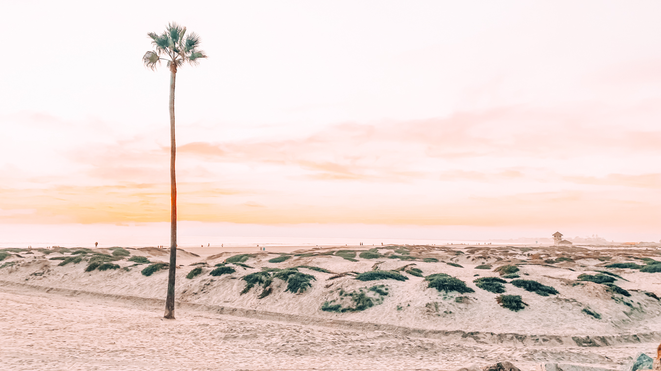 Coronado Beach and an Instagrammable palm tree in San Diego