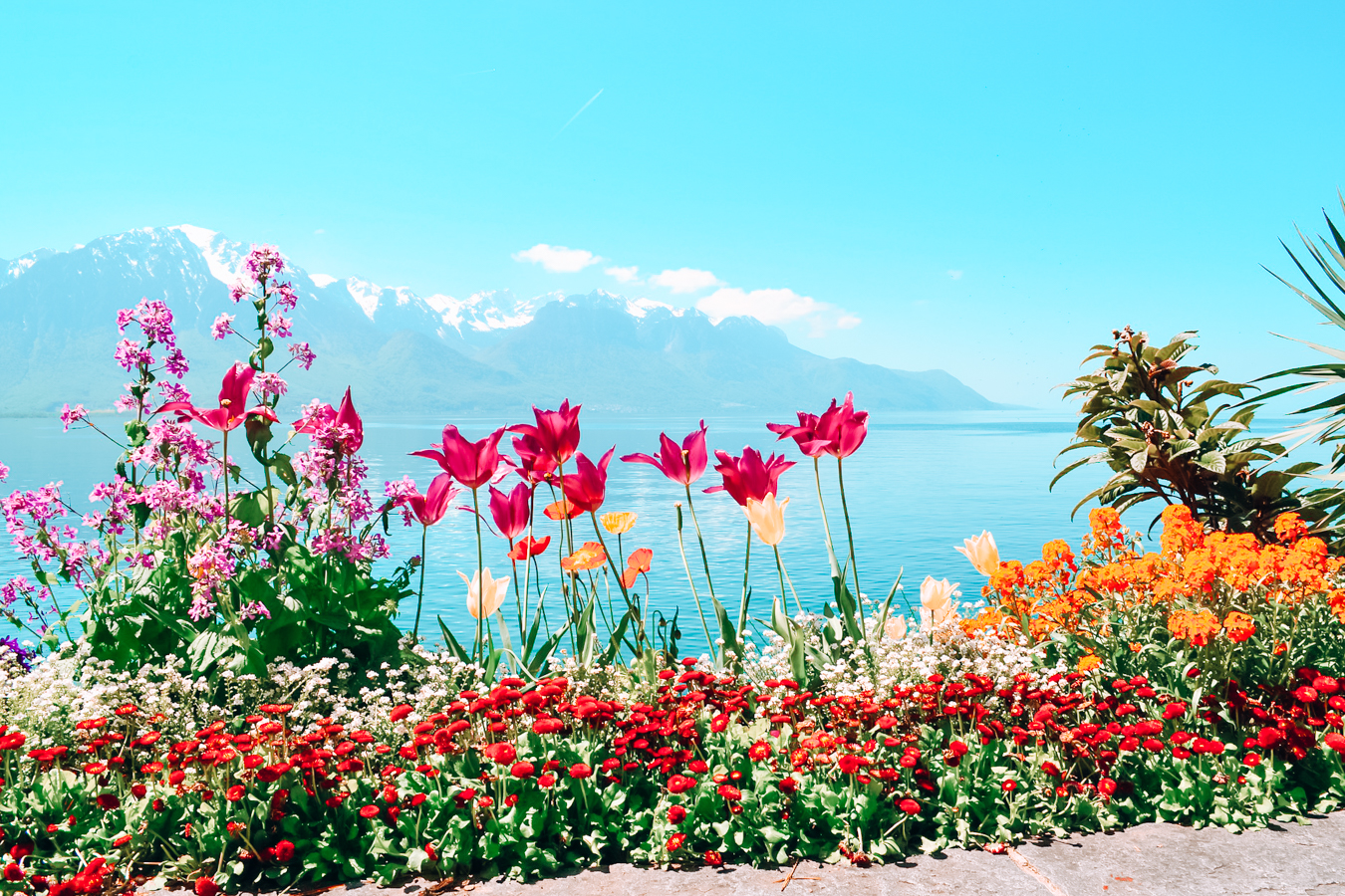 Beautiful flowers at Lake Geneva in Switzerland