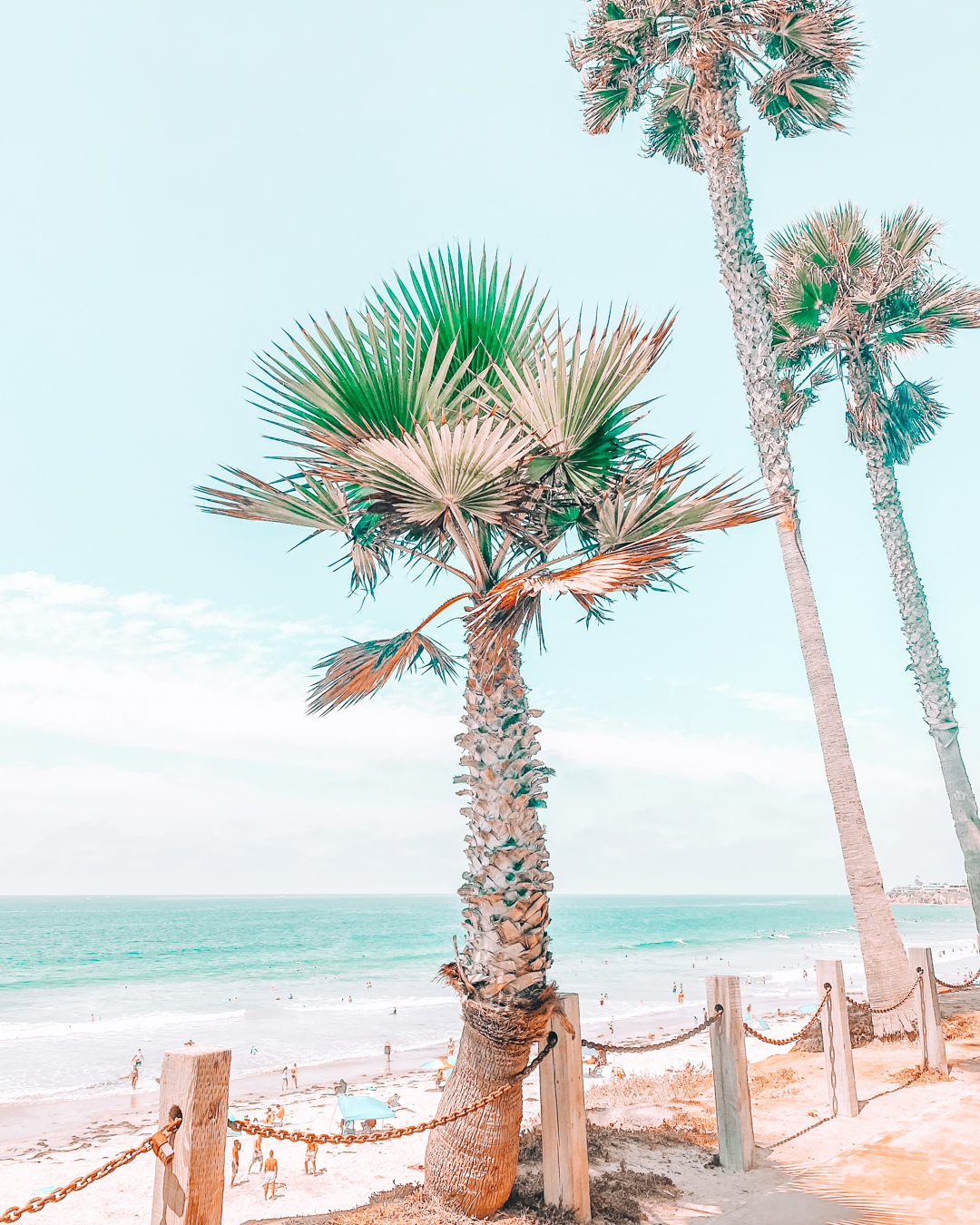 Palm trees at Mission Beach