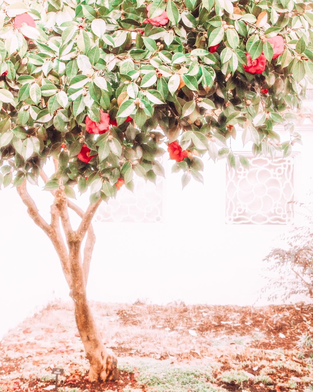 Tree at the Lan Su Chinese Garden