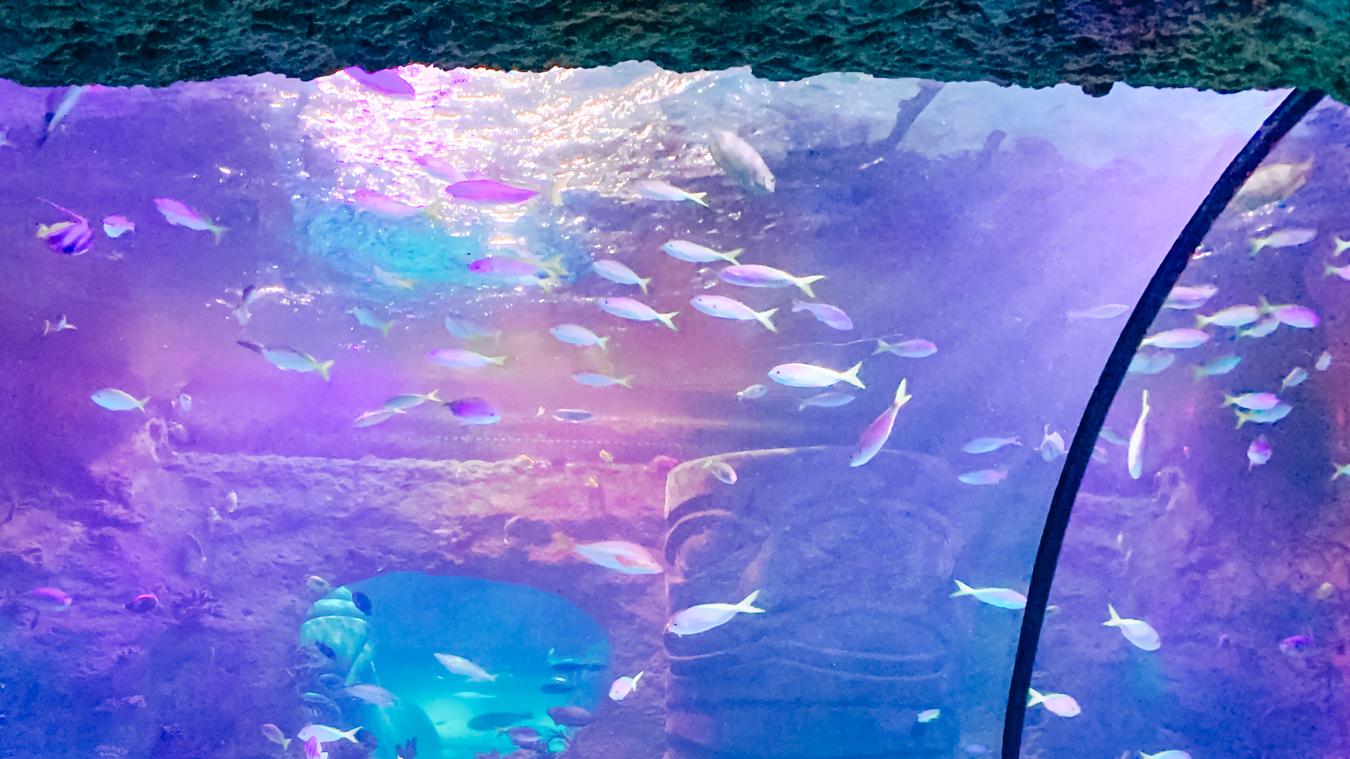 Seaworld in Orlando
