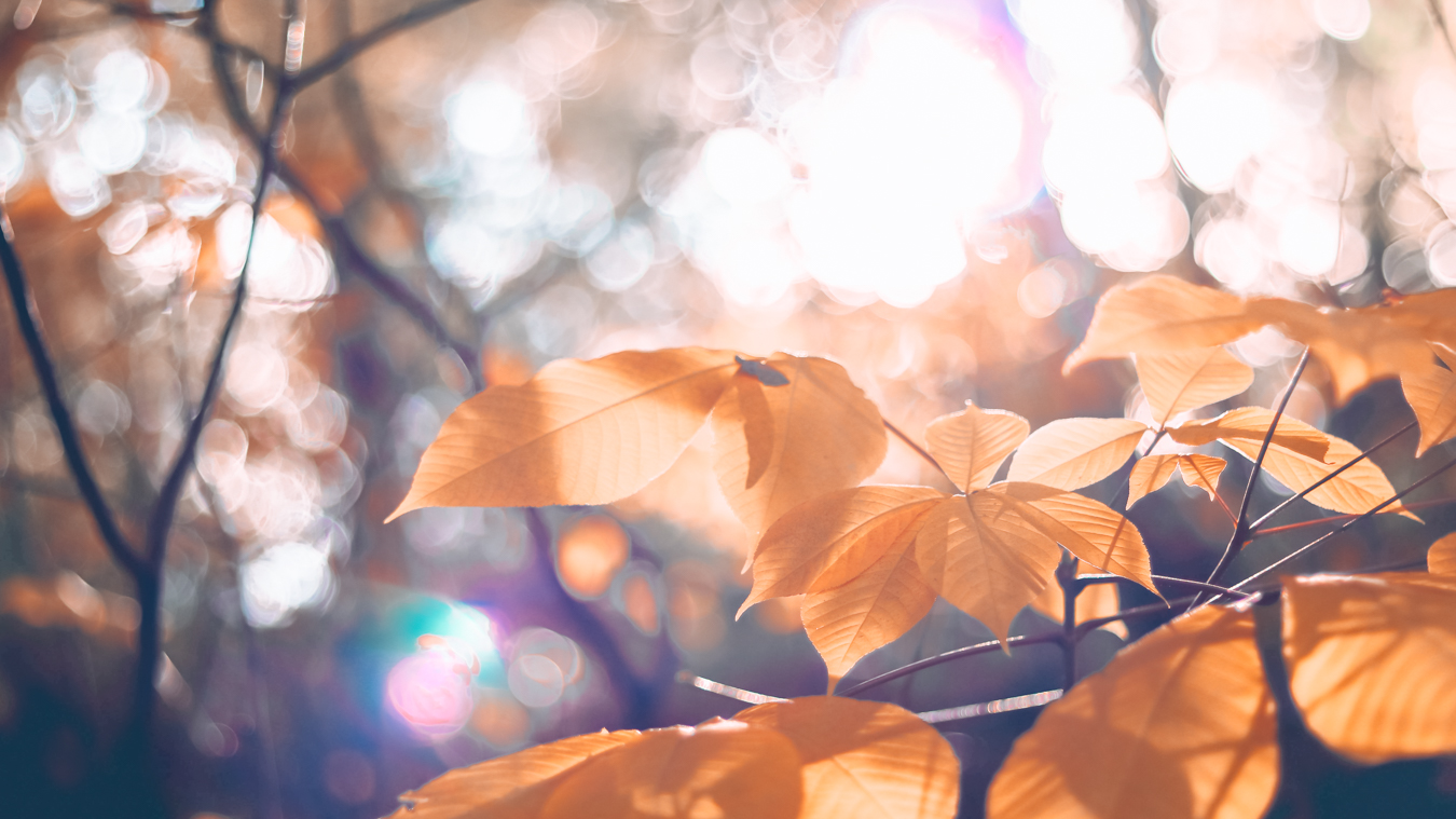Leaves at Schenley Park
