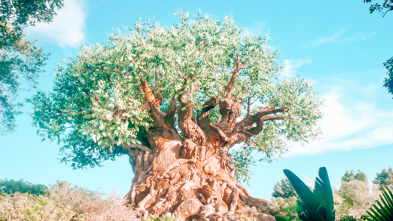 Instagrammable tree in Orlando at Animal Kingdom