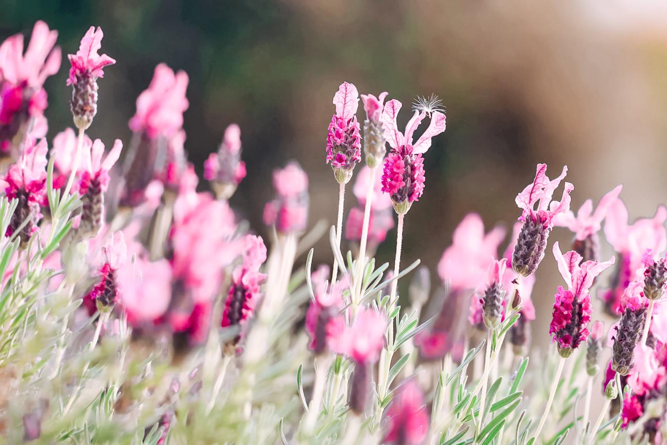 Flowers at the United States Botanic Garden in Washington DC