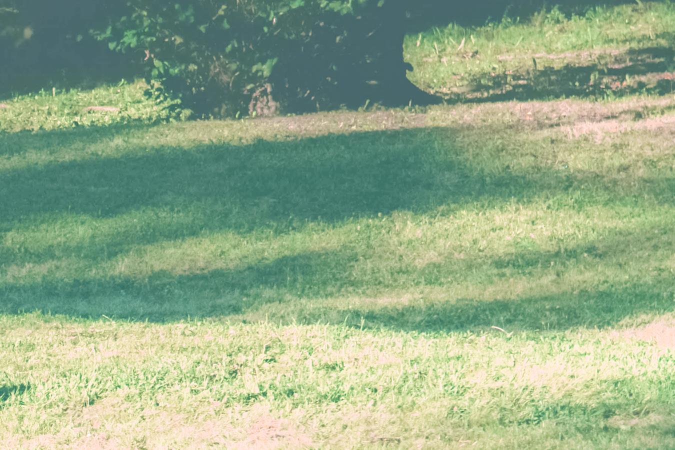 Grass at Cleveland Cultural Gardens