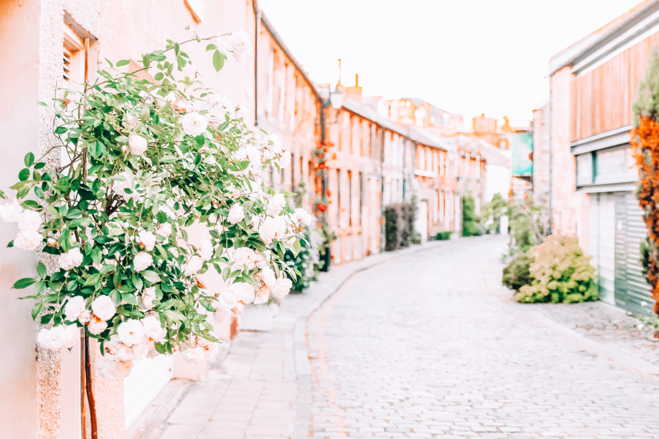 Street with flowers in Edinburgh