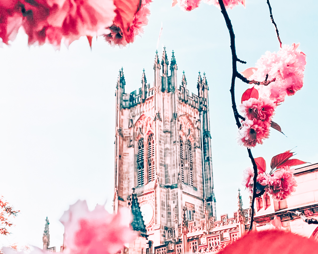 Church and flowers in Manchester