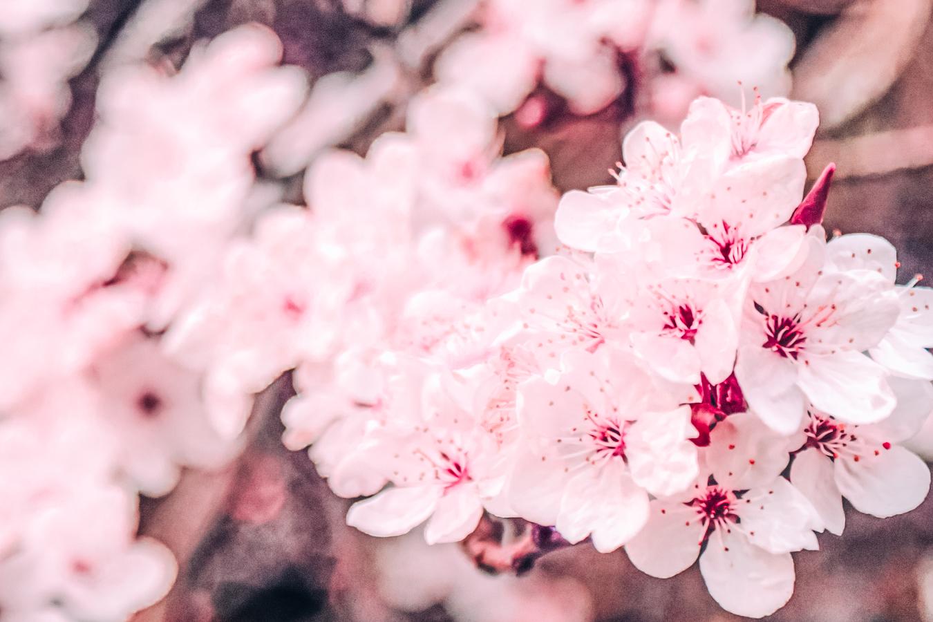 Pink flowers Ormeau Park