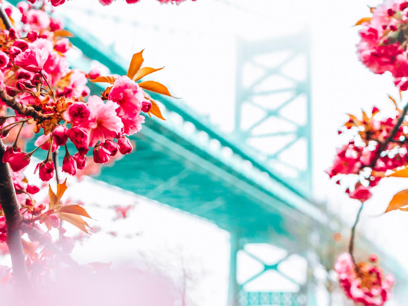 Bridge and flowers in Philadelphia