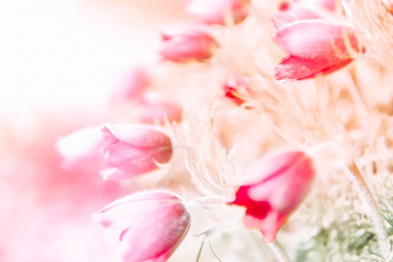 Pink flowers at Royal Botanic Garden Edinburgh