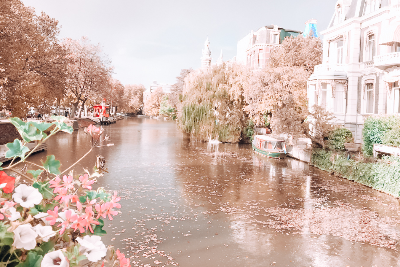 Canal, flowers, and buildings in Amsterdam