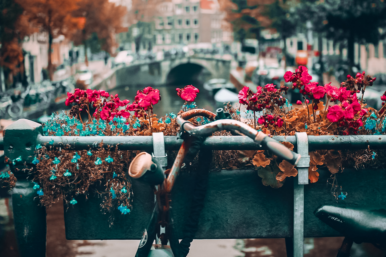 Bike and flowers in Amsterdam