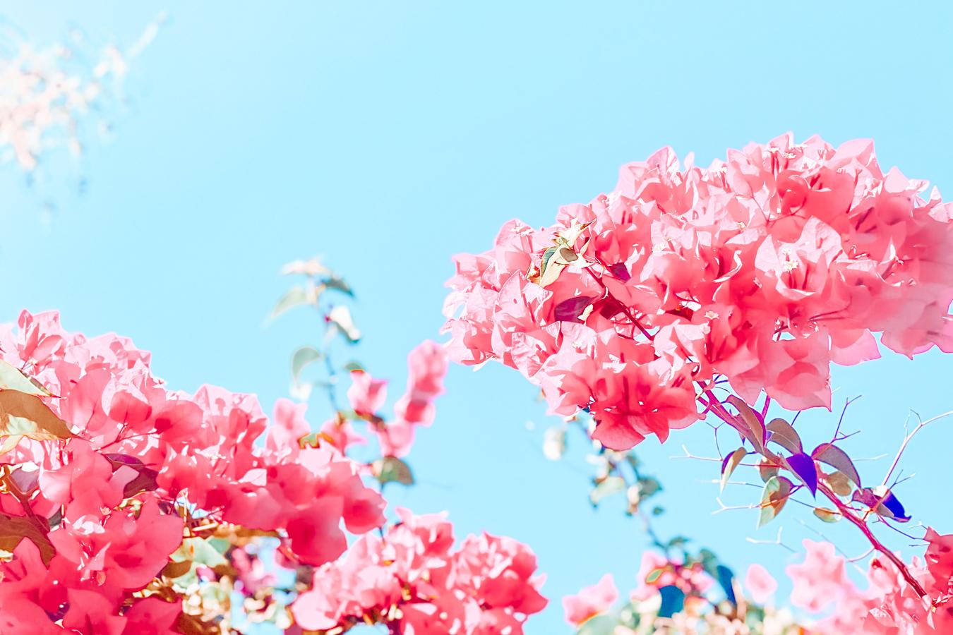 Flowers in Tucson