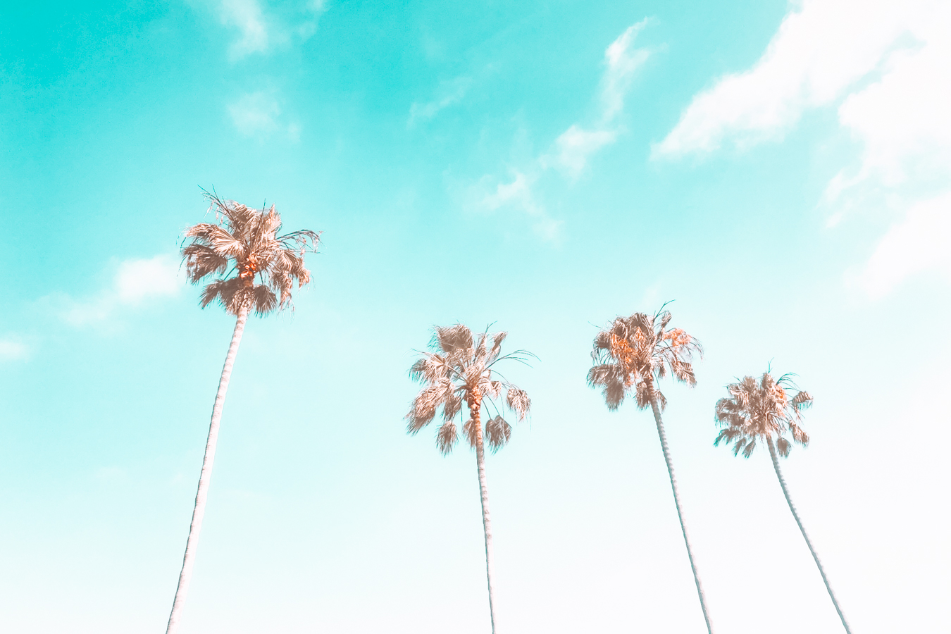 Four palm trees and a blue sky in San Diego