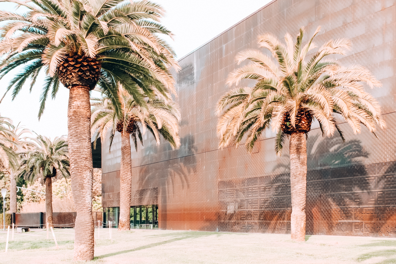 Palm trees at de Young Museum