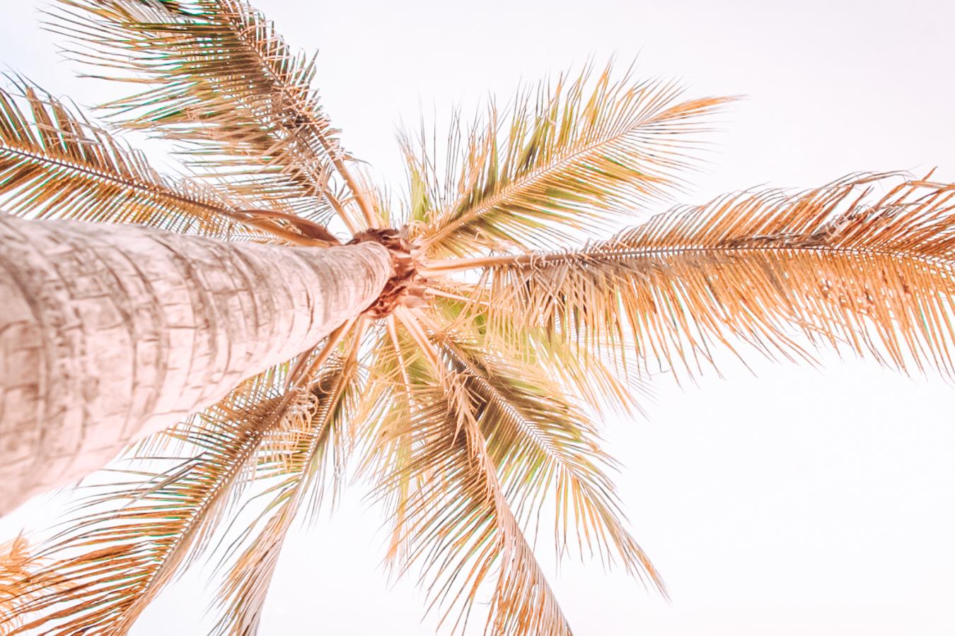 Palm tree from below
