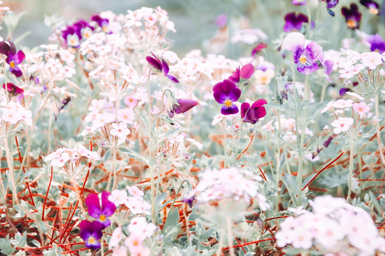 Flowers at Reader Rock Garden