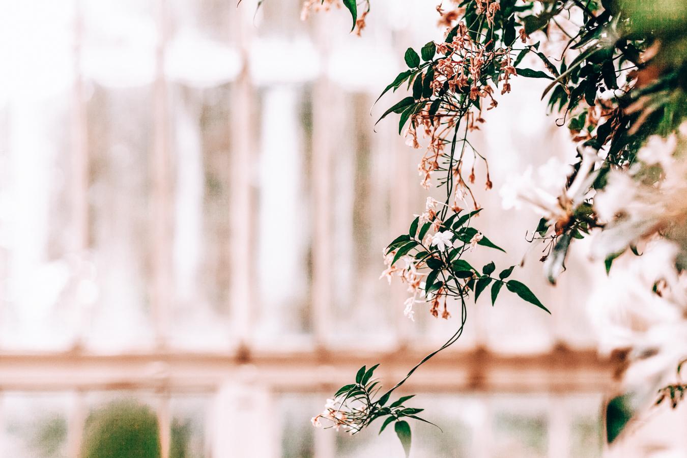 Nature at the National Botanic Gardens