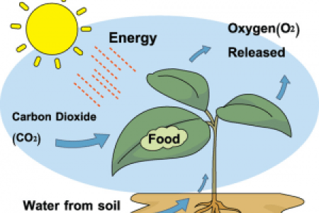 Photosynthesis chart paper photosynthesis process hd images a step by step guide to understand the process of photosynthesis photosynthesis plant cell diagram photosynthesis images stock photos vectors shutterstock ccuart Image collections