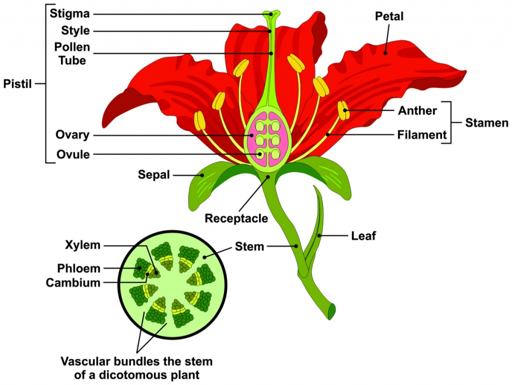 Flower Parts And Functions Dyna Gro